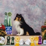 Cole Runner Up Most Versatile Collie ~ CCA 2010