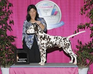 Dax 2010 AKC Invitational