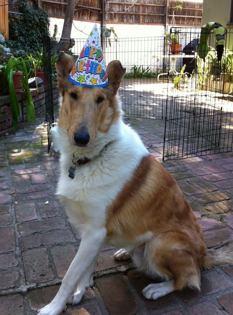 Rowdy's 1st Birthday (1)